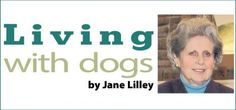 A disastrous trip back from The City by Jane Lilley #dogs #cars #breakdown
