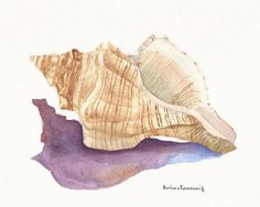 Hey, I found this really awesome Etsy listing at https://www.etsy.com/listing/67964318/conch-seashell-shell-art-print