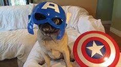 Avenger Costume For Pugs
