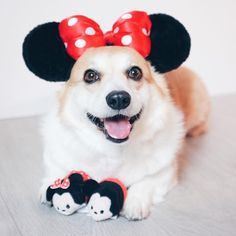 """63k Likes, 449 Comments - Disney (@disney) on Instagram: """"Three ch-ears for #NationalPuppyDay! ❤️ Swipe  for more! (: @sneakersthecorgi, @comoandthecity,…"""""""