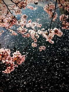 Wind blowing the blossoms