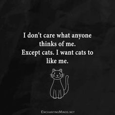 Luv cats - What more to say other than we just LOVE cool stuff!