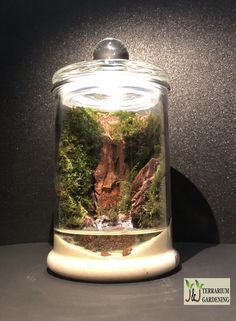 Moss terrarium that brings greenery to your home or office desk. Indoor Garden, Indoor Plants, Moss Terrarium, Edible Plants, Closer To Nature, Plant Care, Greenery, Diy, Passion