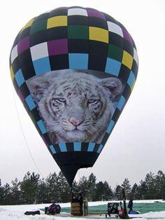 white tiger hot air balloon, Skyway Balloons, Oklahoma