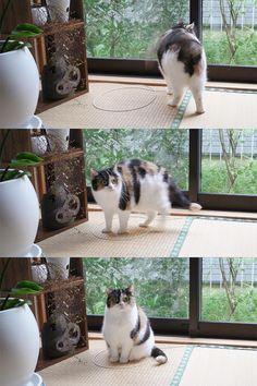 これがネコに生まれたもののサガ? 小さい円を描いておくと、なぜかそこでに入りたがる不思議な習性が判明!:ぁゃιぃ(*゚ー゚)NEWS 2nd