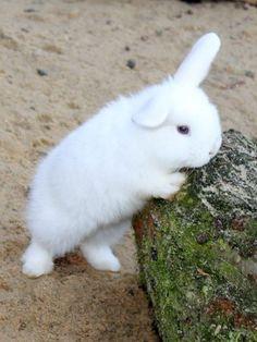 Cute rabbit ♥