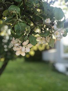 Fra hagen Fruit