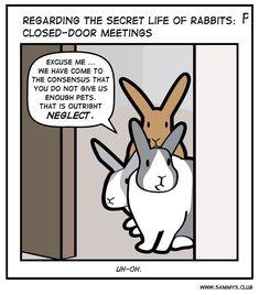 Bunny Meme, Funny Bunnies, Cute Funny Animals, Cute Baby Animals, Cute Dogs, Cute Babies, Bunny Art, Bunny Bunny, Secret Life Of Rabbits