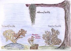Waldorf ~ 5th grade ~ Botany ~ Lichen ~ main lesson book