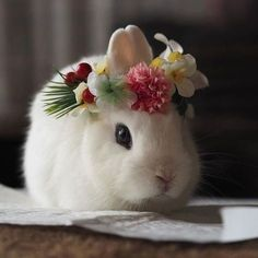In the event you are searching for a pet that is not just cute, but very easy to keep, then look no further than a family pet bunny. Baby Animals Super Cute, Cute Baby Bunnies, Cute Little Animals, Cute Babies, Lop Bunnies, Bunny Bunny, Animals And Pets, Funny Animals, Cute Bunny Pictures