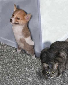 So funny cat and dog picture! :) :) :)