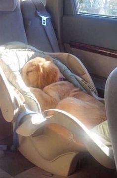un chien s'est endormi dans le siège auto du bébé