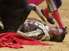Le matador El Fundi a été mis KO par un taureau (José Pedro Prados) 2009
