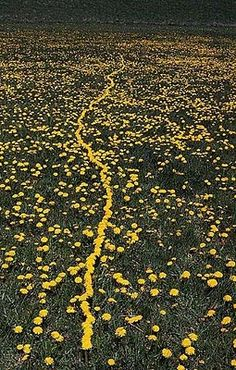 Experimental Theology: The Art of Andy Goldsworthy: Part 1, A Collaboration with Nature