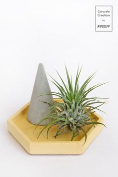 Make your combination! Shop now: www. Air Plants, Greenery, Concrete, Pineapple, Kit, Make It Yourself, Gift Ideas, Decoration, Shop