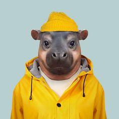 Pygmy Hippopotam - Choeropsis Liberiensis