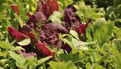 Pěstování zeleniny a odplevelení záhonů