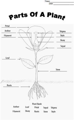 parts of plants worksheets | Click here: parts_of_a_plant.pdf to ...