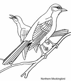 Blue Jay Coloring Page 15