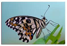 http://divinapastora-esther.blogspot.com.es/2012/12/projecte-les-papallones.html