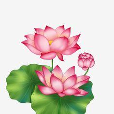 62 Gambar Bunga Teratai Terbaik Bunga Teratai Teratai Air Dan