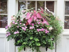 Flower window box / planter for shade. Pink and green for southern warm climate, window box easy planting Flower window box / planter f Window Box Plants, Window Box Flowers, Shade Flowers, Window Planter Boxes, Flower Boxes, Planters For Shade, Flower Planters, Shade Plants, Potted Plants