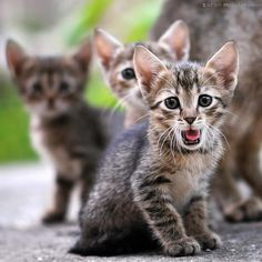 https://iso.500px.com/cat-photography-tips/?utm_source=500px&utm_medium=social&utm_campaign=cat-photography-tips