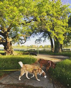 I'm #pawsitivity #excited for all these #newsmells!! Today #wesaw #horses and #cranes and other #doggies too! #Louisiana has been #somuchfun! #camperlife #lowcountry #deepsouth #equestrian #farm #savebosnianstrays #proudbosnianrescue
