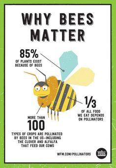 """Bee's get a bad rap. But bees are amazing little creatures. Bees are what we call """"Pollinators"""", meaning while they are buzzing around, collecting nectar for honey production in a thriving hive, they are picking up and dropping off bits of pollen … The Animals, Wall E, Potager Bio, Save Our Earth, I Love Bees, Bee Friendly, Thinking Day, Busy Bee, Save The Bees"""