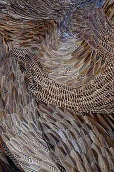 Evacuate by Kate MccGwire, 2010 Patterns In Nature, Textures Patterns, Print Patterns, Organic Patterns, Pattern Ideas, Design Textile, Textile Art, Feather Art, Bird Feathers
