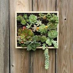 cadre à plantes