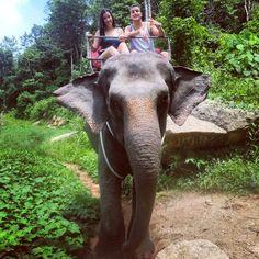 Phuket - Thailand Phuket Thailand, Trips, Elephant, Animals, Viajes, Animales, Animaux, Traveling, Elephants