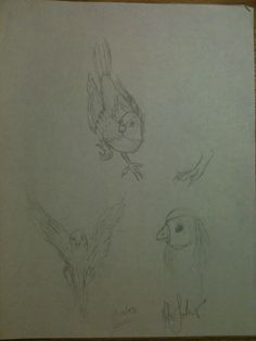 Some bird sketches sketched out while I was outside once. I saw a beautiful bird, and decided to draw it.   -2013-