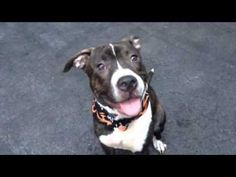 THEO – A1047126   Help us Save NYC AC&C Shelter Dogs