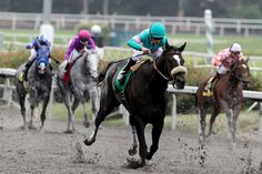 Zenyatta's trainer glad she enters Hall with Rachel Zenyatta Horse, Pink Dog, Angel Art, Horse Riding, Horseback Riding, Rocky Mountains, Racing, Horses, Trinidad