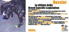(89) Le vittime della Breed Specific Legislation