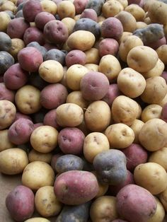 Maine potatoes!