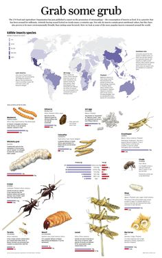 Grab some grub: Nutritional values for edible bugs