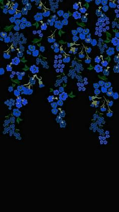 Black background with blue flowers Aesthetic Iphone Wallpaper, Black Wallpaper, Flower Wallpaper, Screen Wallpaper, Cool Wallpaper, Mobile Wallpaper, Aesthetic Wallpapers, Phone Backgrounds, Wallpaper Backgrounds
