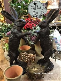Rabbits for spring a