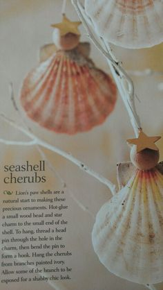 Seashell ornaments.