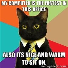Can't get enough cat memes? Check out these hilarious, cute and silly cat memes we collected who show the best (and weirdest) cat traits that make these kitties our favorite fur-balls. Funny Cats, Funny Animals, Cute Animals, Cats Humor, Humor Humour, Funny Stuff, Funniest Animals, Funny Things, Dog Cat