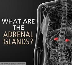 The adrenal glands are a vitally important part of your endocrine system, responsible for your blood pressure, your sleep cycle and your stress response. Adrenal Glands, Adrenal Fatigue, Lack Of Energy, Endocrine System, Health And Nutrition, Blood Pressure, Stress, Walnut Sauce, Sleep