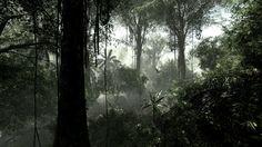 деревья, буш, лианы, Сельва, тропический лес, джунгли