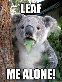 Leaf me alone! #koala #funny #meme
