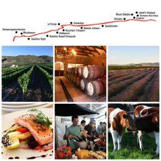 Hermanus wine route R320 Coordinator: Frieda Lloyd Tel: +27 (0)83 305 7319 Email: frieda@hermanuswineroute.com