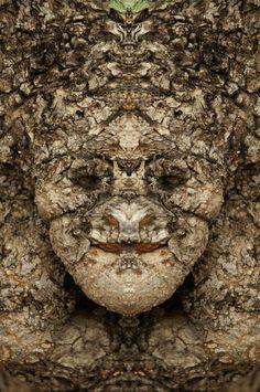 Elido Turco - Dream Creature