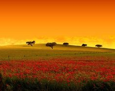 I Like It Wild And Perfect...Always In Alentejo's Plains In My Country Portugal !... http://samissomarspace.wordpress.com