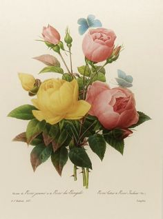 Roses and butterflies - tattoo idea.  Botanical Print, Redoute Rose, Flower Wall Decor No. 127