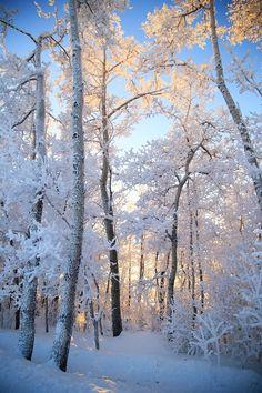 Frozen Trees --- by Nicole Cullen